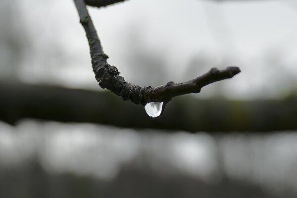 Zweig mit Wassertropfen